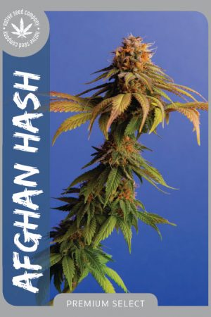 Premium Seed by Native Seed - Afghan Hash