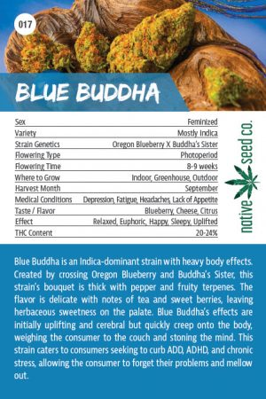 Back of Collector Seed Card by Native Seed - Blue Buddha