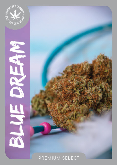 Premium Seed by Native Seed - Blue Dream