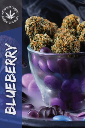 Native Seed Co. Collector Card - Blueberry