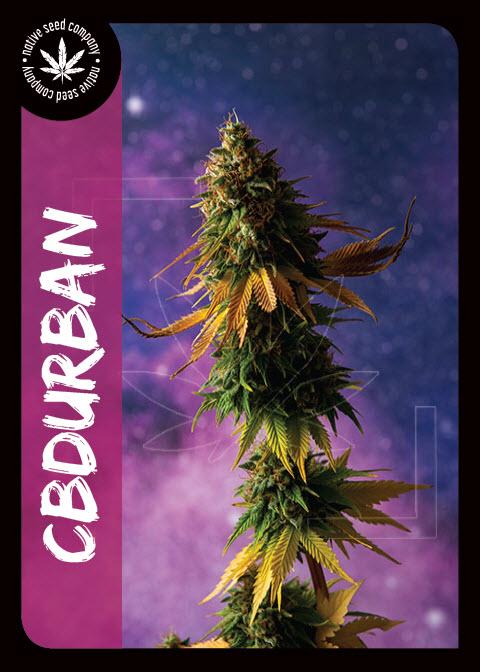 Premium Seed by Native Seed - CBDurban