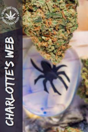 Native Seed Co. Collector Card - Charlotte's Web