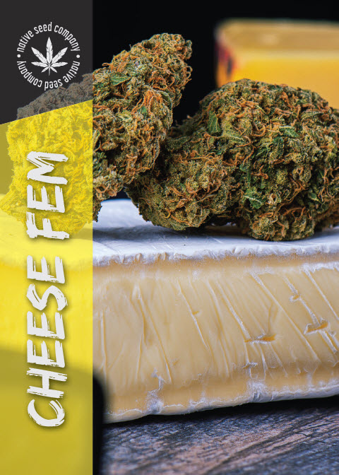 Collector Seed by Native Seed - Cheese FEM