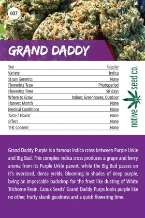 Native Seed Co. Collector Card - Grand Daddy - Back