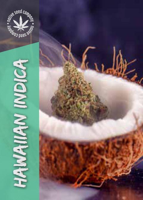 Native Seed Co. Collector Card - Hawaiian Indica