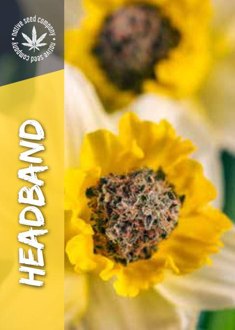 Native Seed Co. Collector Card - Headband