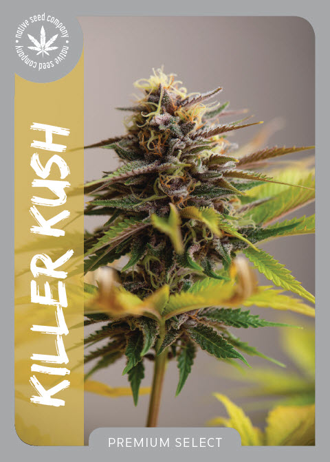 Premium Seed by Native Seed - Killer Kush