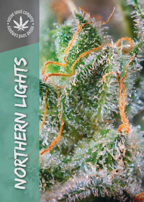 Collector Seed by Native Seed - Northern Lights