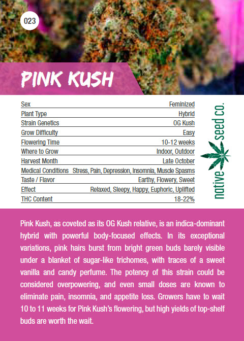 Native Seed Co. Collector Card - Pink Kush - Back