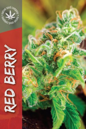 Collector Seed by Native Seed - Red Berry