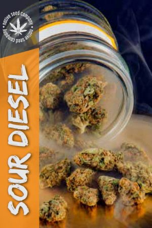 Native Seed Co. Collector Card - Sour Diesel