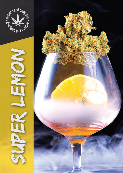 Native Seed Co. Collector Card - Super Lemon