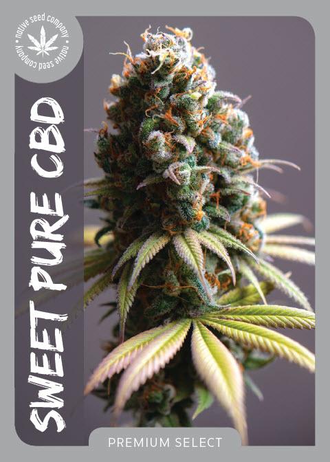 Premium Seed by Native Seed - Sweet Pure CBD