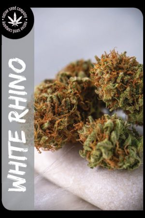Premium Seed by Native Seed - White Rhino