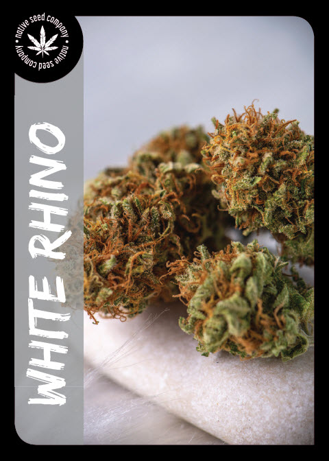 Premium Seed by Native Seed - White Rhino